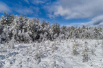 Wetlands and Forests after Fresh Snowfall, Gardner, MA