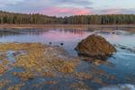 Beaver Lodge at Sunset at Royalston Eagle Reserve, Royalston, MA
