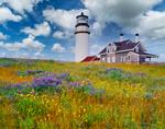 Wildflowers and Cape Cod Light (Highland Light), Cape Cod National Seashore, Truro, MA