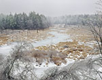 Frozen Marsh after Ice Storm in Trout Brook Area