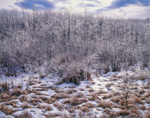 Red Maple Swamp and Freshwater Marsh after Ice Storm, Phillipston, MA