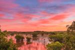 Sunrise over Red Mangroves and Wetland Prairie, Everglades National Park, FL
