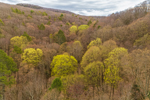 Early Spring Foliage in the Holyoke Range, Pioneer Valley, Hadley, MA