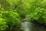Quanduck Brook in Spring, Sterling, CT