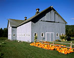 Gray Barn and Pumpkins