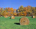 Hay Bales and Fall Colors, Hudson River Valley