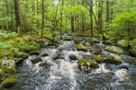 West Branch Fever Brook in Spring, Federated Women's Club State Forest, Petersham, MA