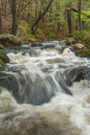 Small Falls on Osgood Brook in Spring, Wendell State Forest, Wendell, MA