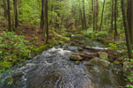 Osgood Brook Flowing through Wendell State Forest in Spring, Wendell, MA