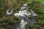 Cascades on Osgood Brook in Spring, Wendell State Forest, Wendell, MA