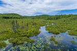 Brook and Wetlands at Beaver Pond, Harrisville, NH