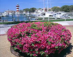 Azaleas at Harbour Town Lighthouse and Harbor
