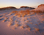 Early Morning Light on Golden Beach Grasses, Hampton Beach State Park