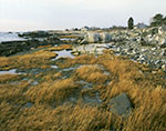Salt Marsh and Rocky Shoreline, Atlantic Coast