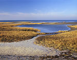 Golden Salt Marsh and Mud Flats in Late Fall, Paines Creek Beach