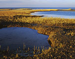 Golden Salt Marsh and Tidal Pool in Late Fall, Paines Creek Beach