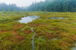 Floating Bogs and Wetlands at Meetinghouse Pond, Marlborough, NH