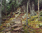 Stone Steps on Ocean Trail through Spruce Forest along Otter Cliffs, Acadia National Park
