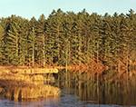 Early Light on Freshwater Marsh along Shoreline of Lake Rohunta