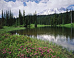 Red Heather and Mt. Rainier at Reflection Lake