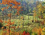 Wetlands in Fall