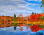 Colorful Foliage Reflecting in Lost Pond In Fall, Union, CT