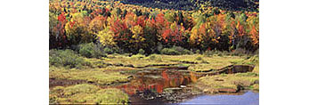 Fall Foliage and Freshwater Marsh, Nesowadnehunk Deadwater