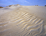 Fox and Bird Tracks in Wind-blown Sand on Coquina Beach, Bodie Island,  Cape Hatteras National Seashore