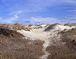 Path through Dunes, Pea Island National Wildlife Refuge  Cape Hatteras National Seashore,