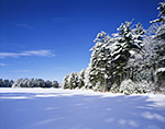 Snow-covered Woodlands along Shoreline of Frozen Quabbin Reservoir, Quabbin Reservation,