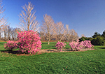 Spring at Colt State Park,