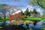 Water Garden in Bloom, Blithewold Arboretum, Bristol, RI