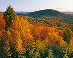 Quabbin Forest in Fall Foliage, New Salem, MA