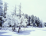 Snow-covered Forest along Lawrence Brook, Royalston, MA