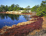 Wild Cranberry Bog and Pitch Pines Surround Freshwater Pond in Inner Dunes, Cape Cod National Seashore, Provincelands