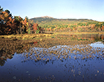 Wetlands and Mt. Monadnock in Fall