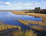Salt Marsh in Fall