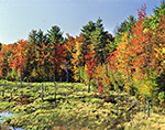 Marsh and Colorful Woodland Edge