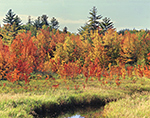 Marsh and Red Maple Swamp in Fall