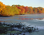 Duckweed and Fall Colors at Kickemuit Reservoir