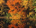 Fall Tapestry at Barden Reservoir