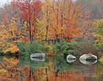 Red Maples on Bank of Millers River