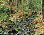 Middle Branch of the Swift River in Fall