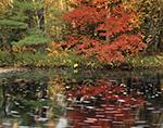 Fall Foliage on Scott Brook