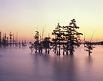 Sunrise over Cypress Trees and Lake Conway with Lake-effect Fog