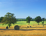 Round Hay Bales in Field with Golden Light under Bright Blue Sky