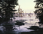 Early Morning Fog at Lake Conway