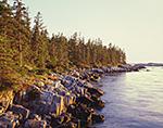 Spruce Forest and Rocks along Shoreline of Isle au Haut