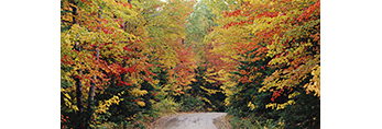 Dirt Road in Fall, Great North Woods