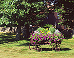 Antique Wagon Filled with Flowers